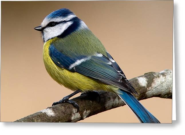 Wingtips Greeting Cards - Blue hood  Greeting Card by Torbjorn Swenelius