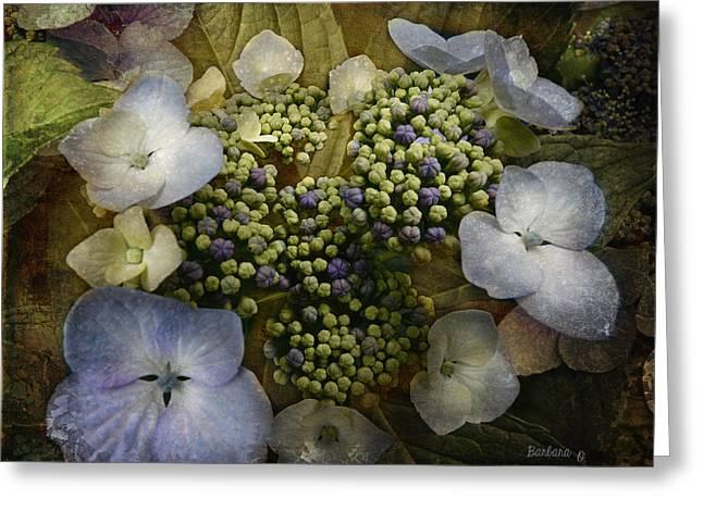 Barbara Orenya Greeting Cards - Blue Hydrangea Greeting Card by Barbara Orenya