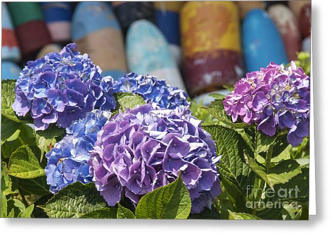 Lobster Buoy Greeting Cards - Blue Hydrangea Greeting Card by Juli Scalzi