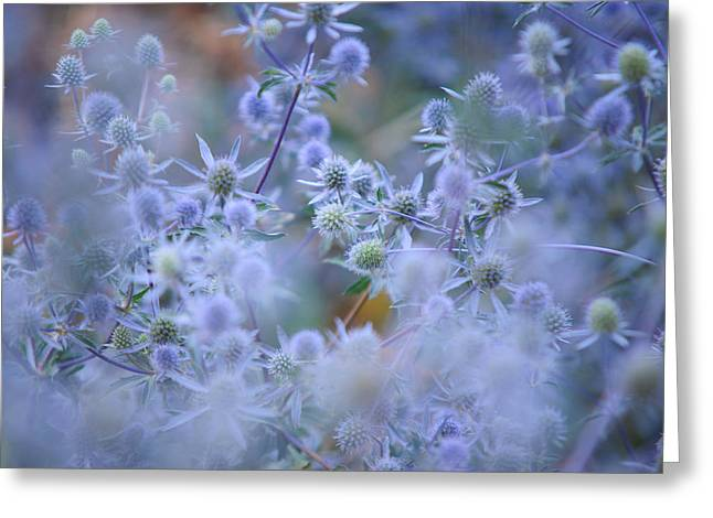 Blue Thistles Greeting Cards - Blue Infinity Greeting Card by Jenny Rainbow