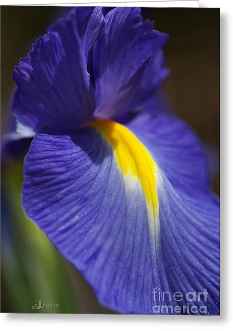Joy Watson Greeting Cards - Blue Iris with Yellow Greeting Card by Joy Watson