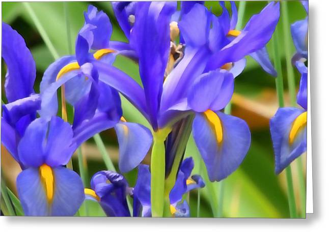 Renewing Greeting Cards - Blue Irises Greeting Card by Art Block Collections