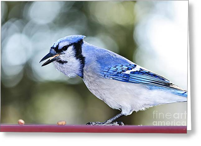 Blue Jay Bird Greeting Card by Elena Elisseeva