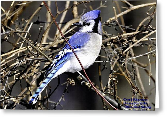 Cellphone Pastels Greeting Cards - Blue Jay Bird  Sitting on a Branch H a Greeting Card by Gert J Rheeders