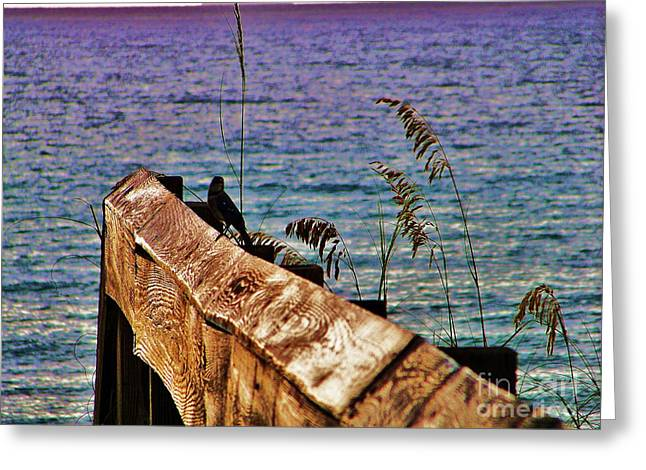 Beach Photos Greeting Cards - Blue Jay Blue Water Greeting Card by Chuck  Hicks