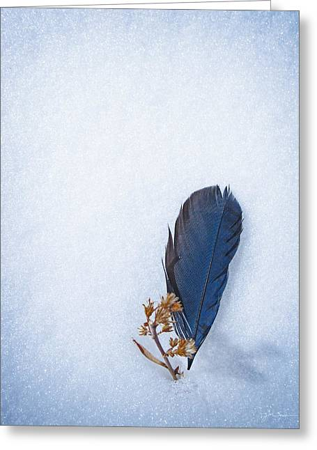 Julie Magers Soulen Greeting Cards - Blue Jay Feather on Snow Greeting Card by Julie Magers Soulen