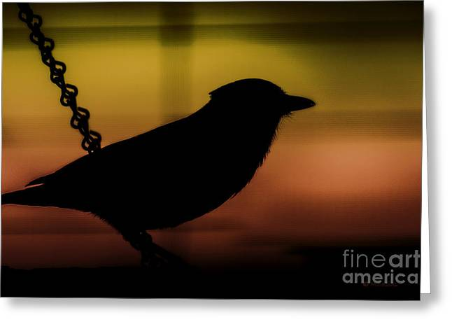 Amanda Collins Greeting Cards - Blue Jay in Sillouette Greeting Card by Amanda Collins