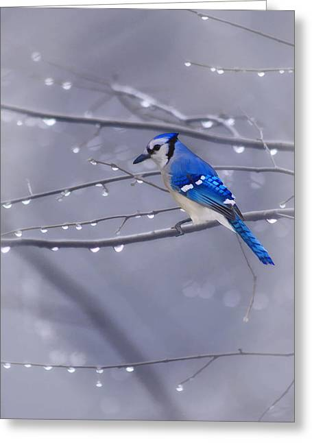 Blue Jay Images Greeting Cards - Blue Jay In The Rain Greeting Card by Tom York Images