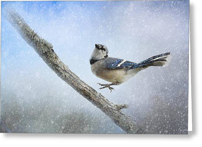 Birds In Winters Greeting Cards - Blue Jay In The Snow Greeting Card by Jai Johnson