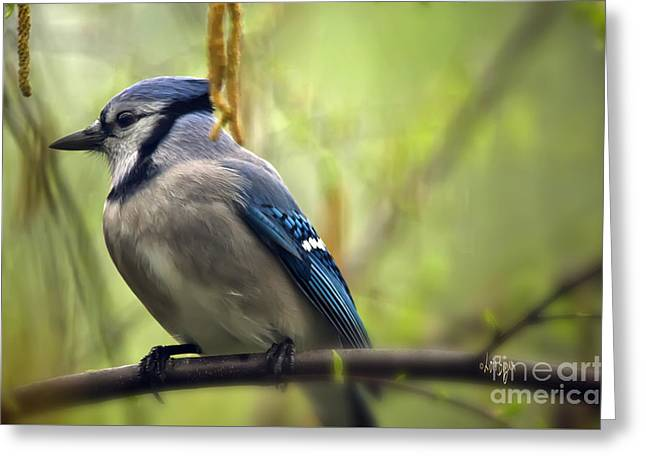 Blue Jay On A Misty Spring Day Greeting Card by Lois Bryan