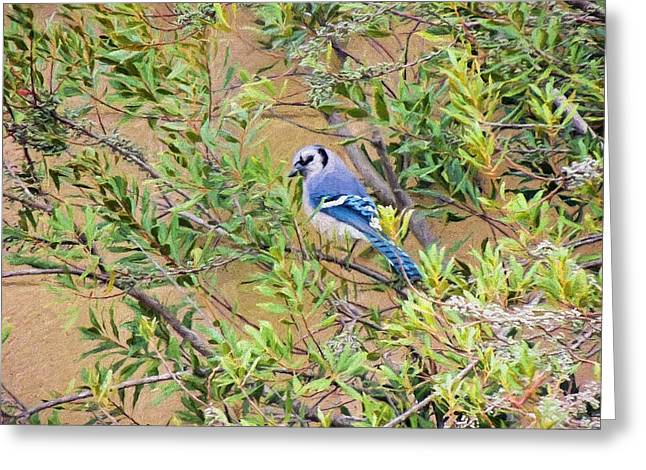 Berry Greeting Cards - Blue Jay on Southern Wax Myrtle Greeting Card by Jayne Wilson