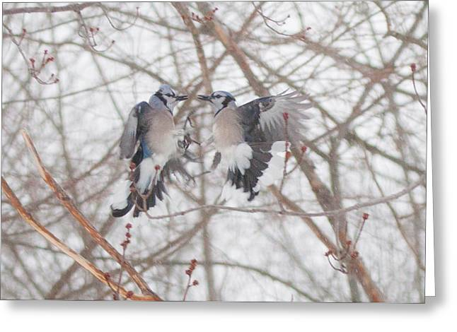 Jaybird Greeting Cards - Blue Jays Greeting Card by Kathy Schreiber-Castrataro