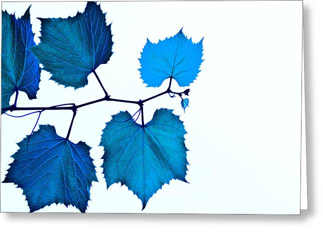 Blue Grapes Greeting Cards - Blue Greeting Card by Jim DeLillo