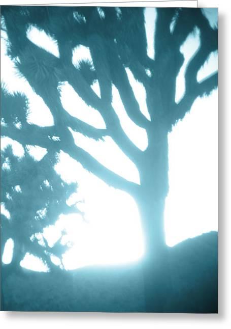 Soft Things Greeting Cards - Blue Joshua Trees in Pinhole Greeting Card by Carolina Liechtenstein