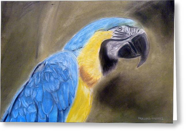 Macaw Art Print Greeting Cards - Blue Macaw Greeting Card by Masaad Amoodi