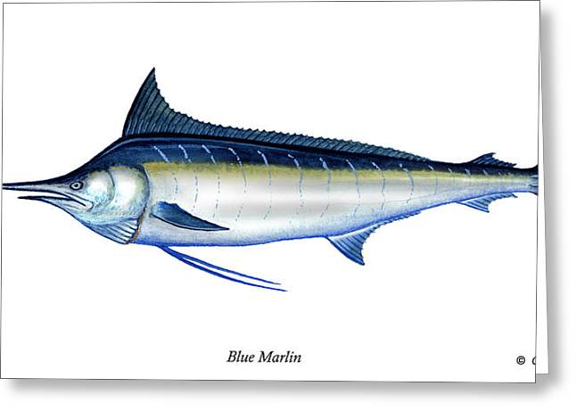 Striped Marlin Greeting Cards - Blue Marlin Greeting Card by Charles Harden