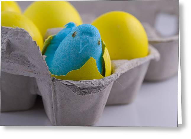 Cracked Eggs Greeting Cards - Blue Marshmallow Chick Hatched in Egg Carton Greeting Card by Juli Scalzi