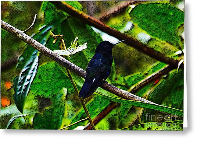 Hovering Greeting Cards - Blue Mindo Hummer Art Greeting Card by Al Bourassa