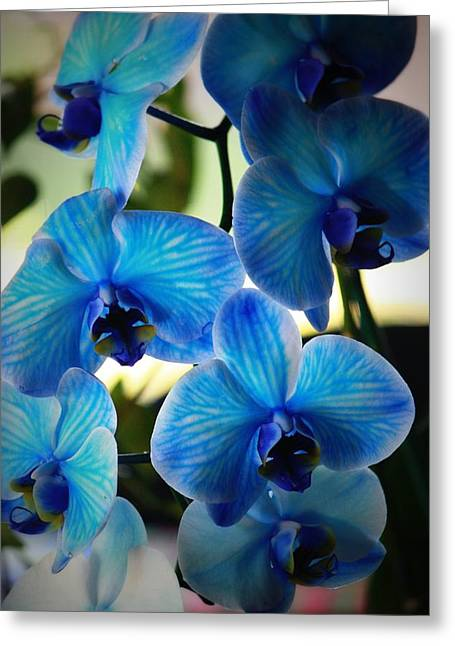Orchids Greeting Cards - Blue Monday Greeting Card by Mandy Shupp