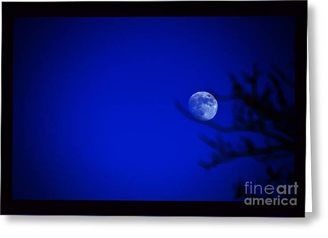 Moonrise Greeting Cards - Blue Moon Rise Greeting Card by Susanne Still