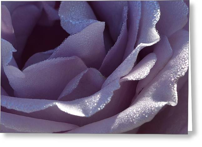 Blue Moon Rose 1.1 Greeting Card by Cheryl Miller