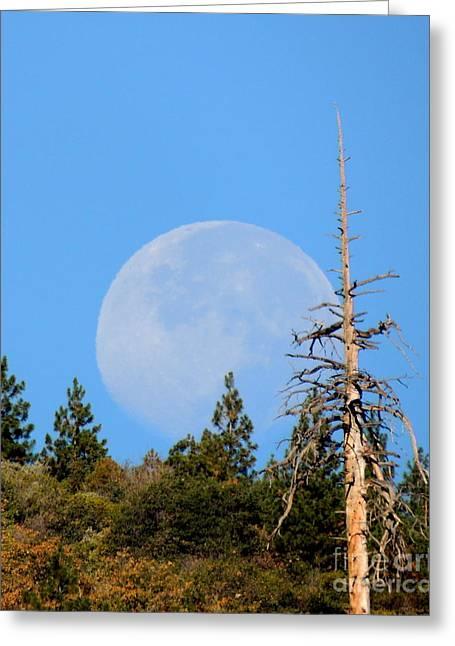 Blue Moon Greeting Card by Vicki Buckler