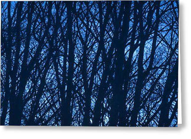 Abstract Nature Greeting Cards - Blue Morning Greeting Card by Diane Diederich