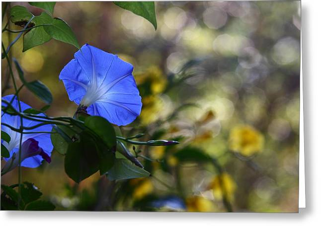 Spring Scenes Greeting Cards - Blue Morning Glories Greeting Card by Linda Unger