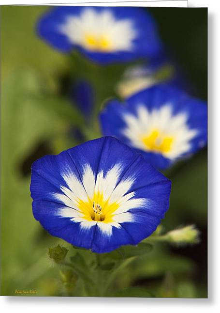 Blue And Green Greeting Cards - Blue Morning Glory Flowers Greeting Card by Christina Rollo