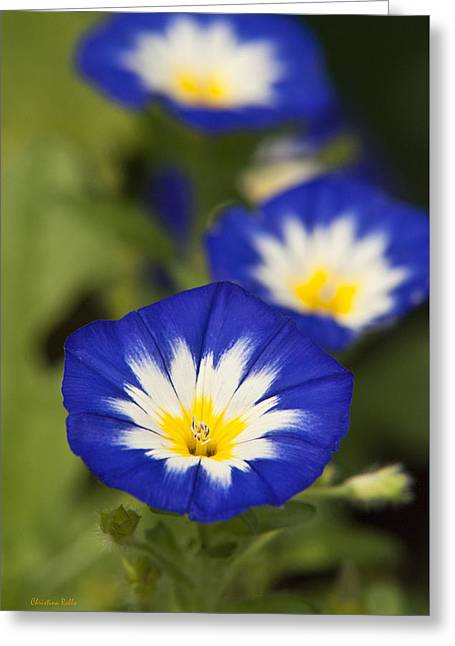 Blue Morning Glory Flowers Greeting Card by Christina Rollo