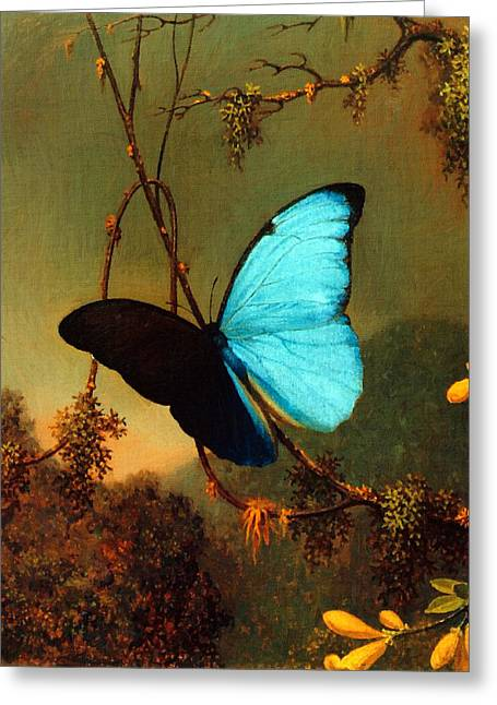 Vintage Painter Greeting Cards - Blue Morpho Butterfly Greeting Card by Martin Johnson Heade