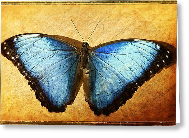 Blue Morpho Butterfly  Greeting Card by Saija  Lehtonen
