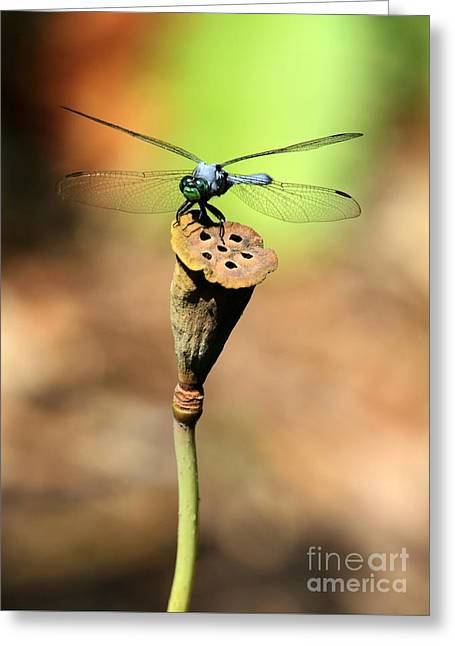 Lotus Seed Pod Greeting Cards - Blue Mosquito Hunter Greeting Card by Sabrina L Ryan