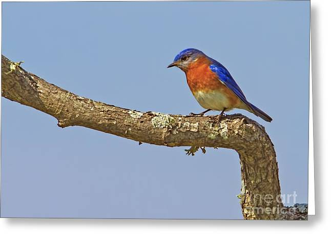 Blue On Blue Greeting Card by Gary Holmes