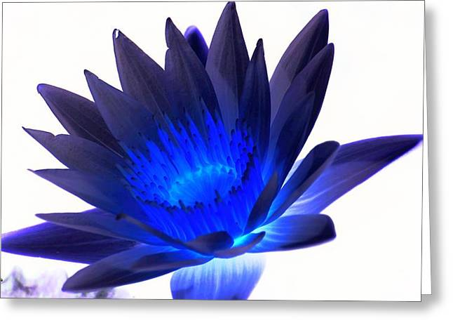 Nature Center Pond Greeting Cards - Blue Passion Greeting Card by Rob Luzier
