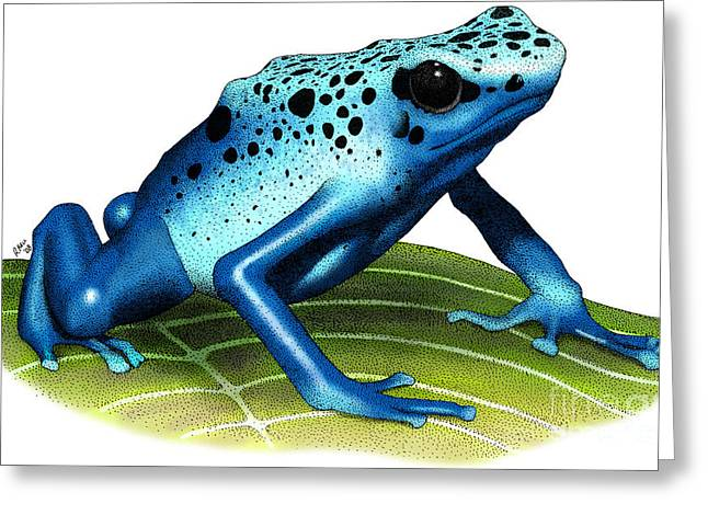 Blue Poison Dart Frog Greeting Card by Roger Hall