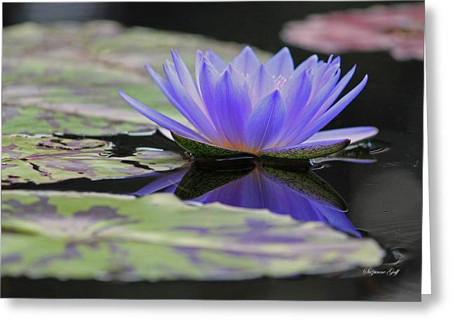 Lily Pad Greeting Cards Greeting Cards - Blue Purple Dreams Greeting Card by Suzanne Gaff