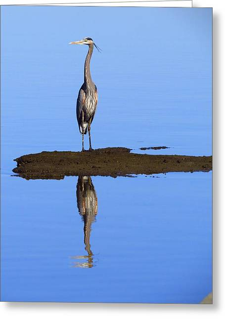 Wadingbird Greeting Cards - Blue Reflections Greeting Card by Phyllis Beiser