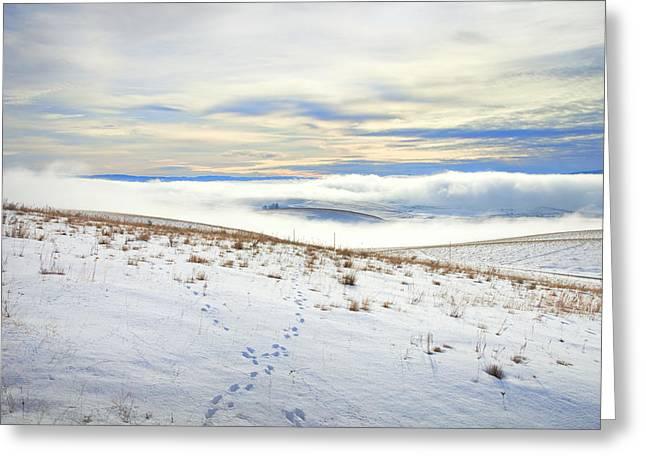 Animal Tracks Greeting Cards - Blue Remembered Hills Greeting Card by Theresa Tahara