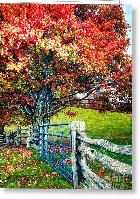 Pasture Framed Prints Greeting Cards - Blue Ridge - Fall Colors - Autumn Maple Tree Fence Gate II Greeting Card by Dan Carmichael