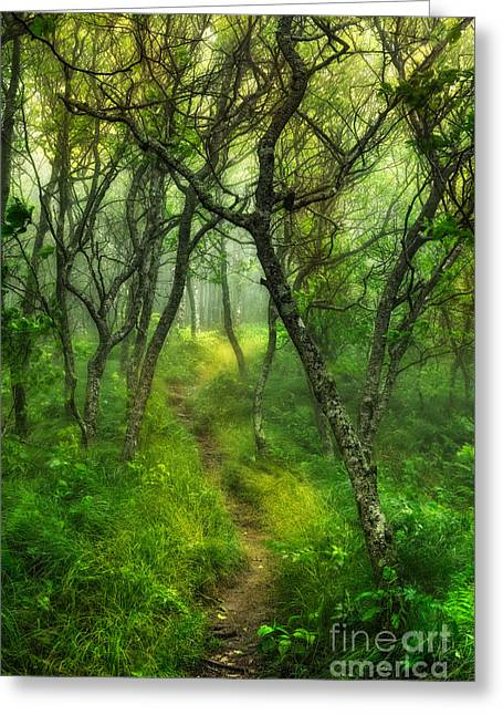 Abstract Mountains Framed Prints Greeting Cards - Blue Ridge - Hiking Trail Through Trees in Fog I Greeting Card by Dan Carmichael