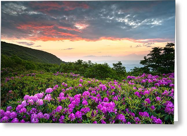 Craggy Greeting Cards - Blue Ridge Parkway Sunset - Craggy Gardens Rhododendron Bloom Greeting Card by Dave Allen