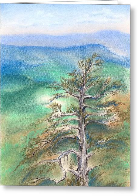 Mountain Valley Pastels Greeting Cards - Blue Ridge Pine Greeting Card by MM Anderson