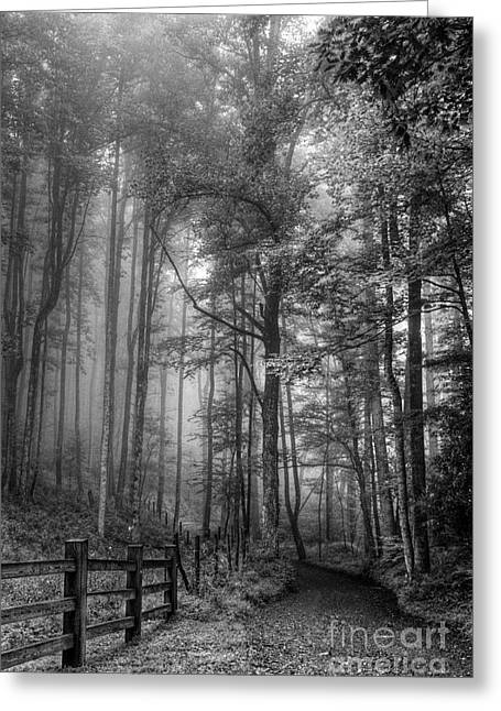 Country Dirt Roads Greeting Cards - Blue Ridge - Trees in Fog Country Road Greeting Card by Dan Carmichael