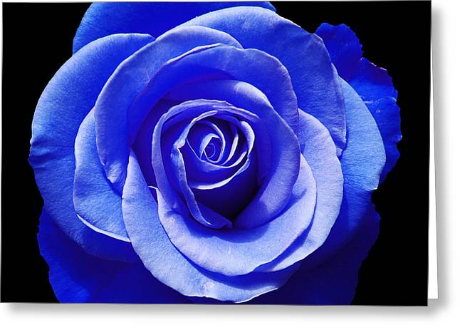 Blooms Greeting Cards - Blue Rose Greeting Card by Aimee L Maher Photography and Art