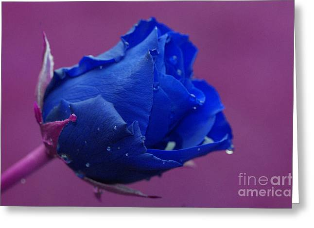 Purple Abstract Greeting Cards - Blue rose Greeting Card by Carol Lynch