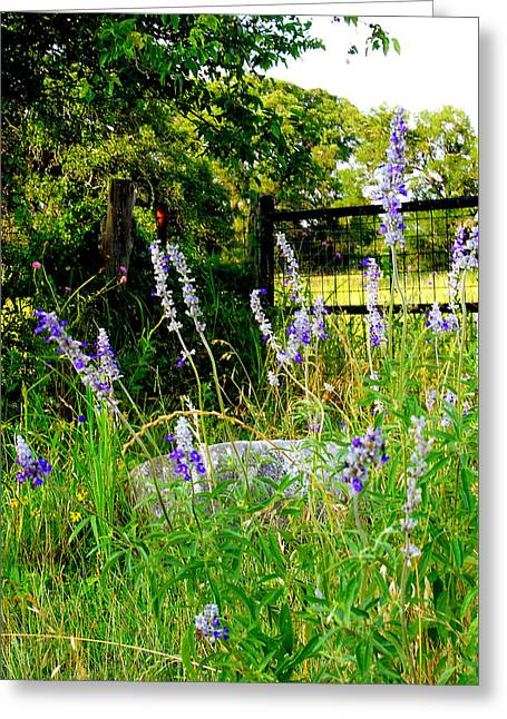 Blue Salvia Wildflowers Greeting Card by ARTography by Pamela Smale Williams