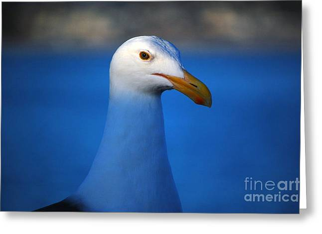 Santa Cruz Wharf Greeting Cards - Blue Seagull Greeting Card by Debra Thompson