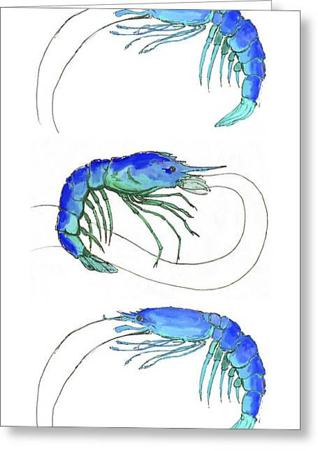 Water Themed Paintings Greeting Cards - Blue Shrimp Trio Greeting Card by Alexandra Nicole Newton