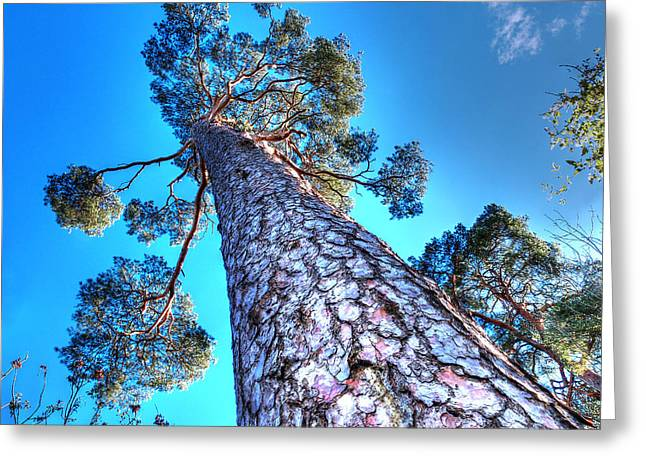 Colourful Bark Greeting Cards - Blue Skies Above Greeting Card by Gill Billington